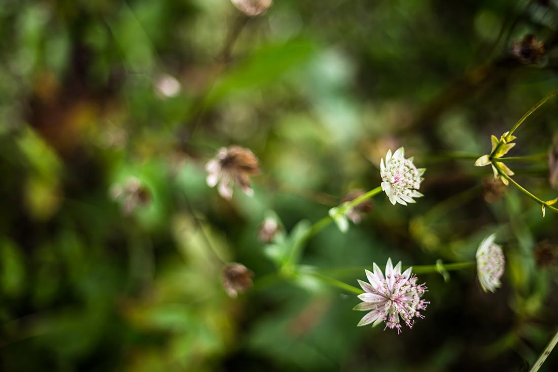 Blume_MG_8248-5