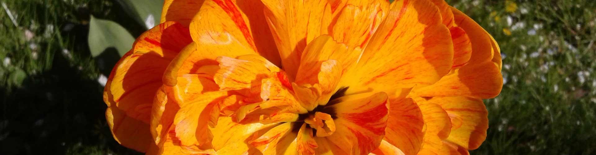 Blume-Maier-Gallenbach-Slider_1920x500px