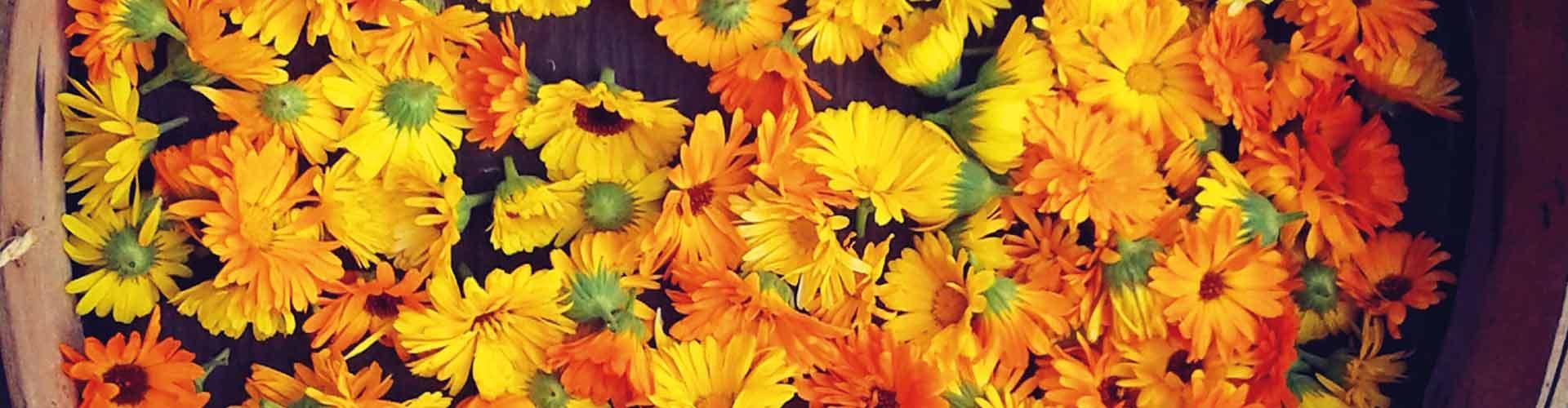 Blumenkorb-1920x500px